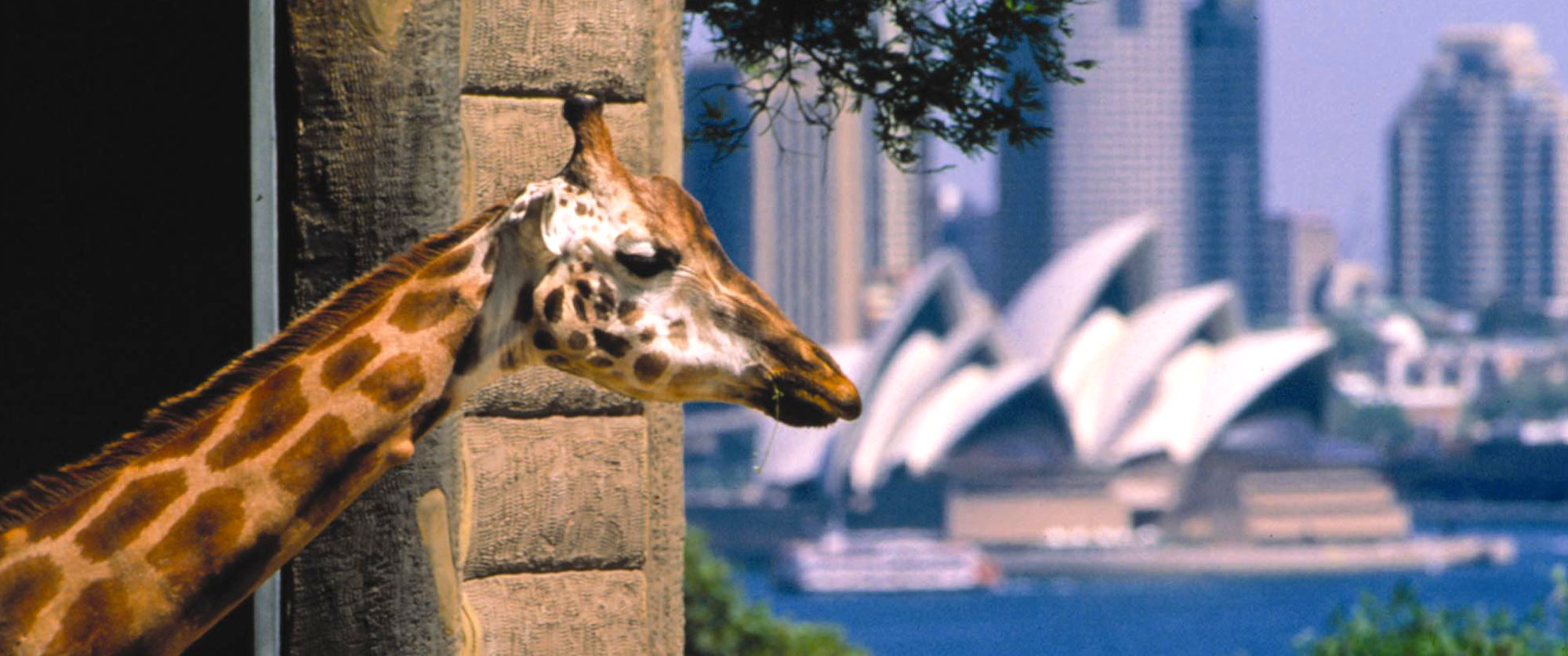 Australia Family Vacation Packages: Beaches and Wildlife
